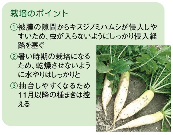 ヤギ子の菜園計画 第5回