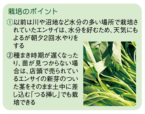 ヤギ子の菜園計画 第6回