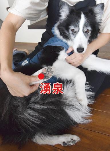 愛犬のホームケア 第2回